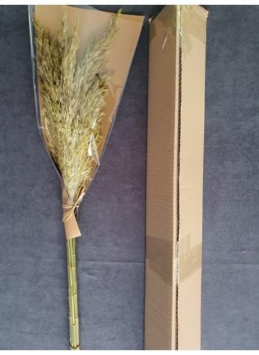 Kuru Çiçek Deposu Kuru Çiçek Şoklanmış 10'Lu Pampas Otu Karışık 100 Cm Sarı